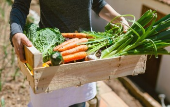 5 Tips For The First Time Gardener