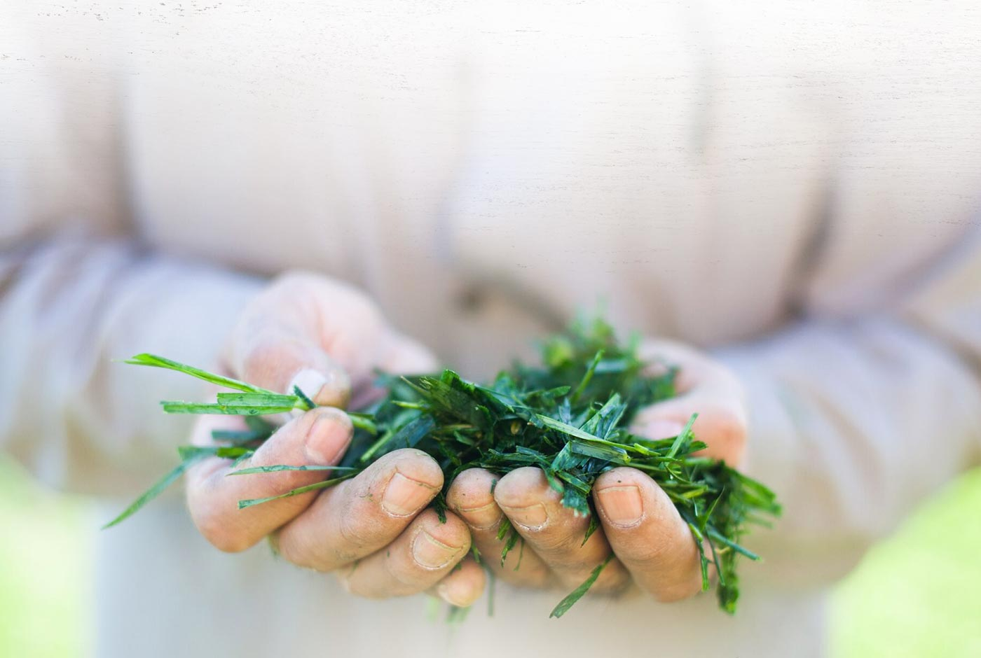 Hands holding Grass